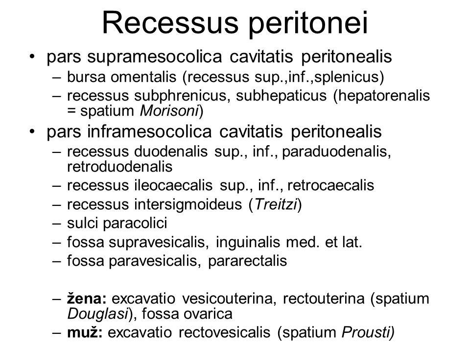 Recessus peritonei pars supramesocolica cavitatis peritonealis