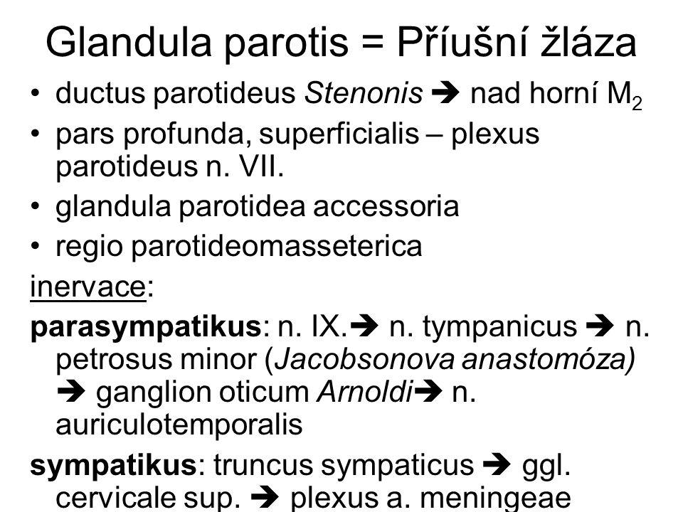 Glandula parotis = Příušní žláza