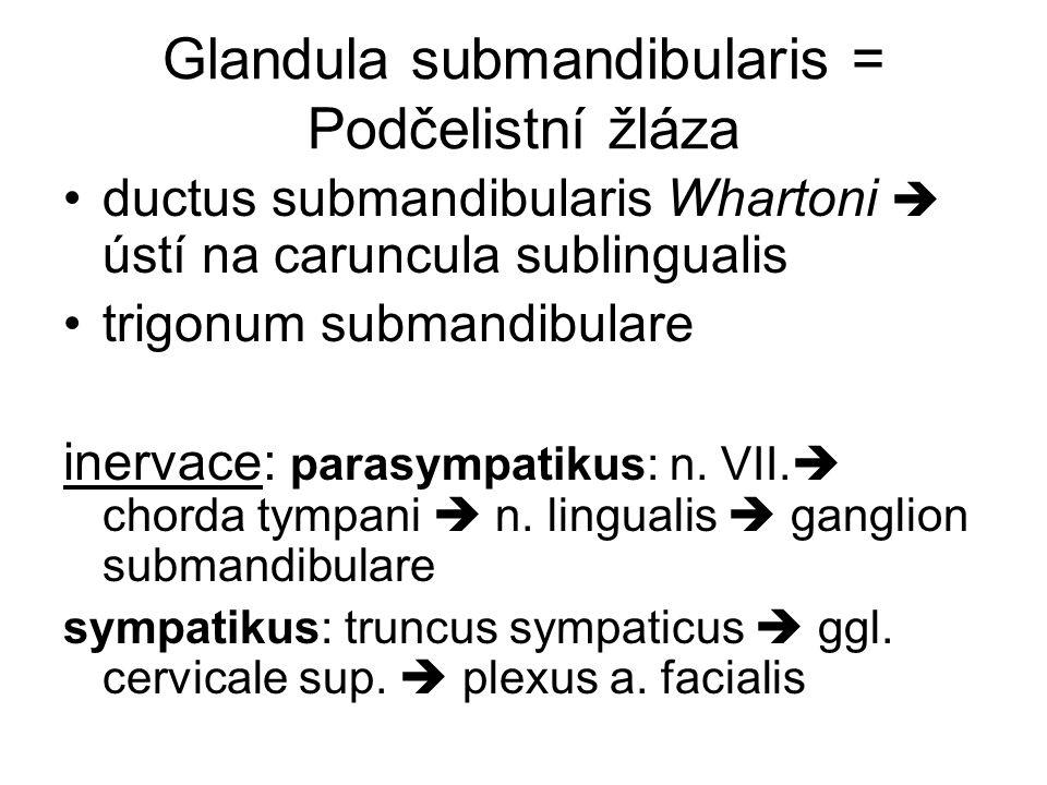 Glandula submandibularis = Podčelistní žláza