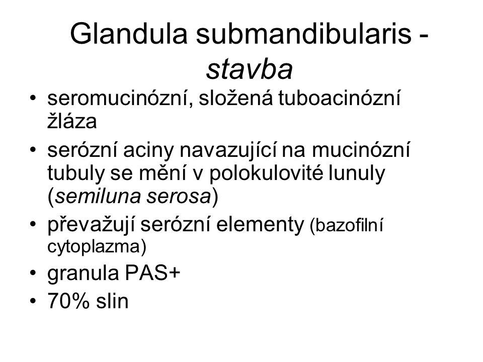Glandula submandibularis - stavba