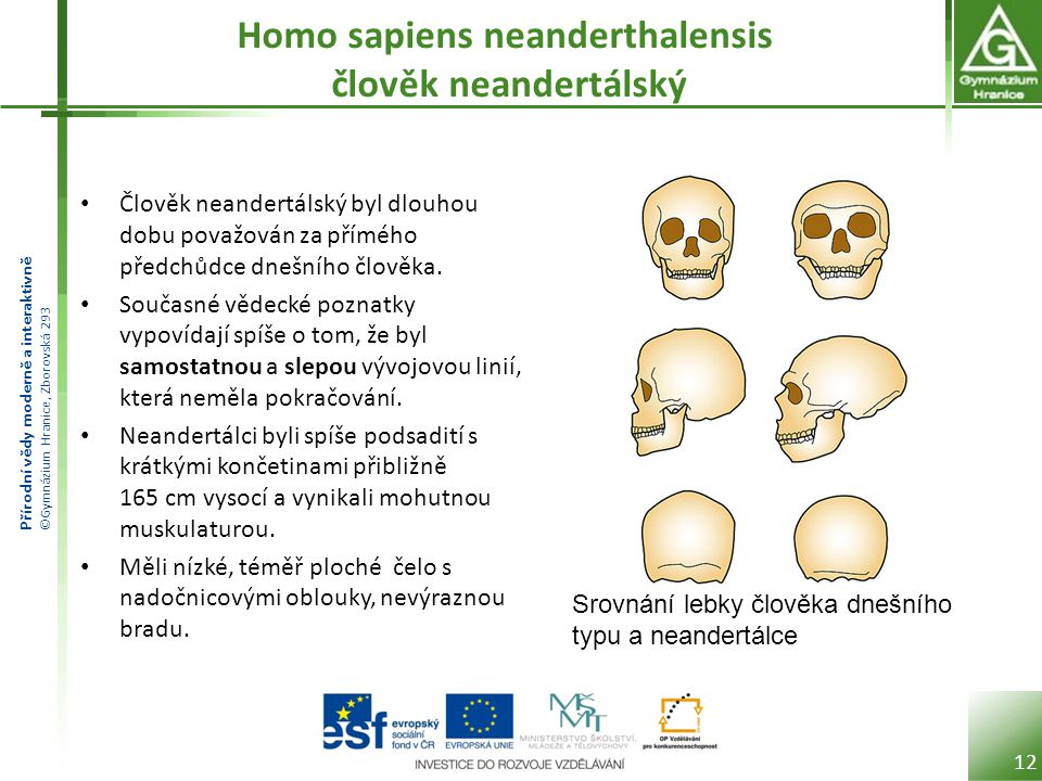 Homo sapiens neanderthalensis člověk neandertálský