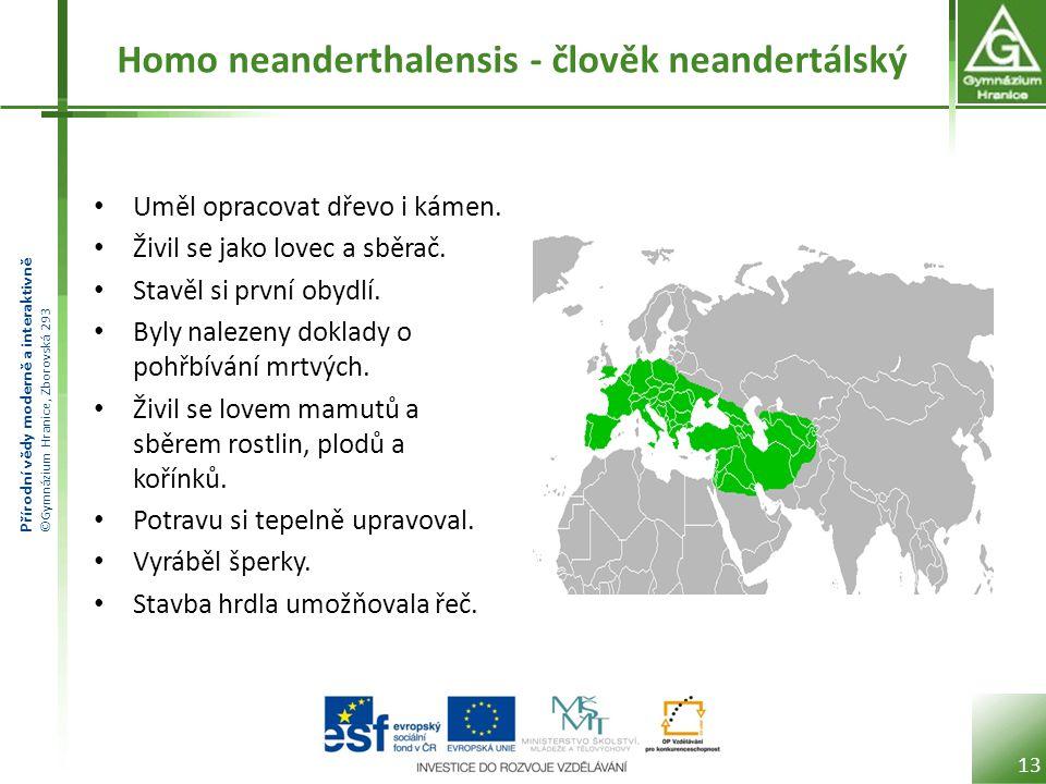 Homo neanderthalensis - člověk neandertálský