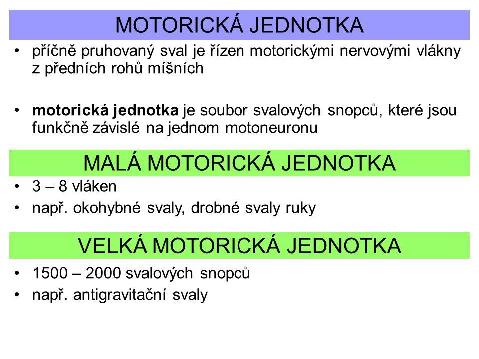 MALÁ MOTORICKÁ JEDNOTKA