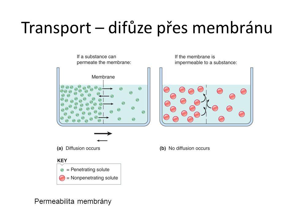 Transport – difůze přes membránu
