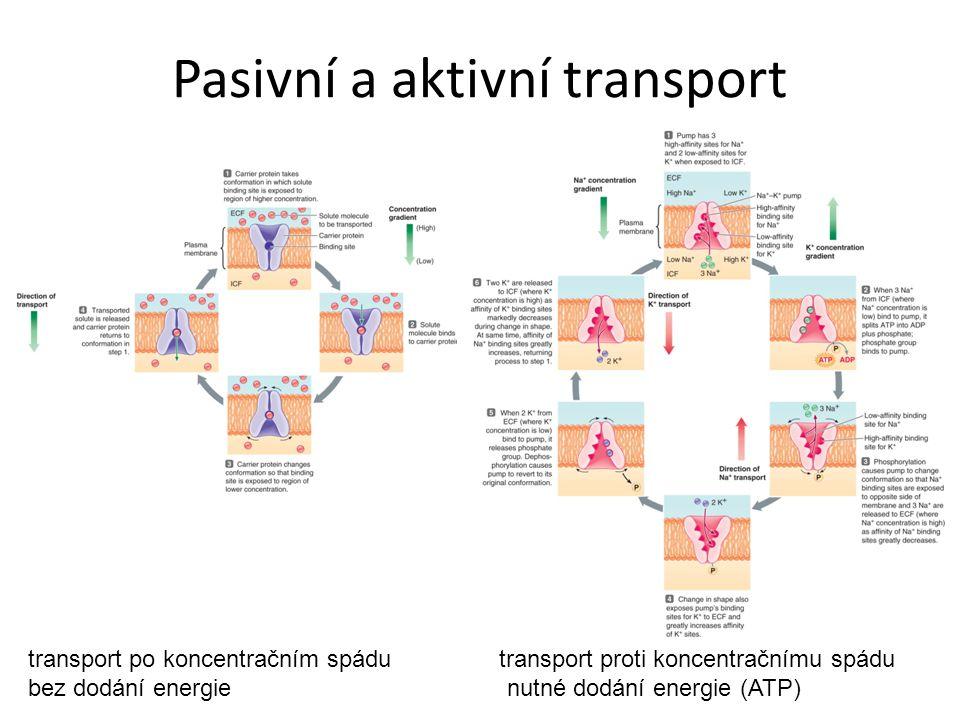 Pasivní a aktivní transport