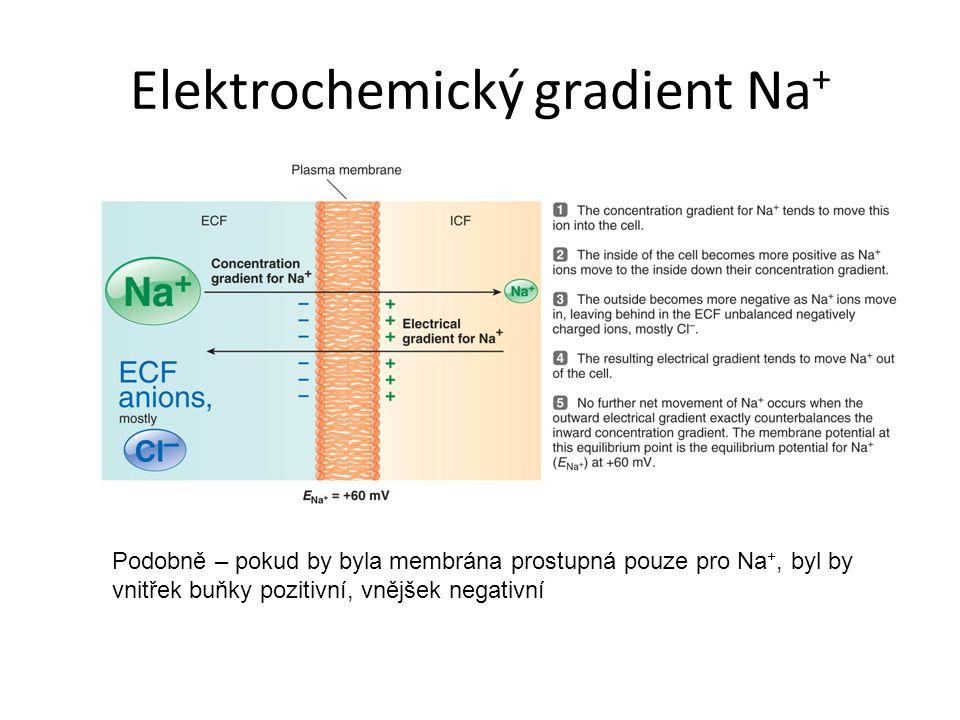 Elektrochemický gradient Na+