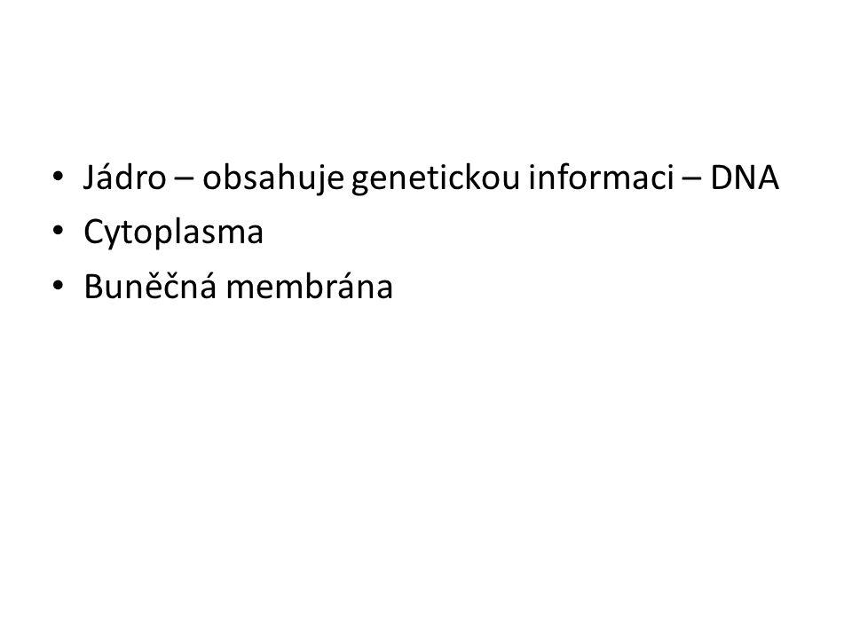 Jádro – obsahuje genetickou informaci – DNA