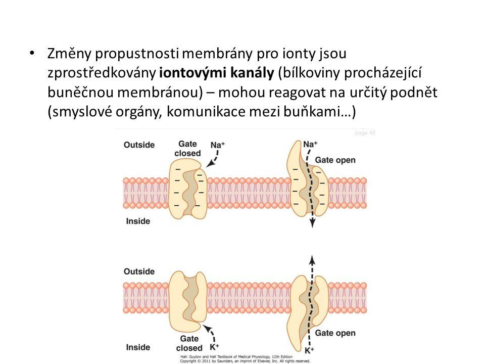 Změny propustnosti membrány pro ionty jsou zprostředkovány iontovými kanály (bílkoviny procházející buněčnou membránou) – mohou reagovat na určitý podnět (smyslové orgány, komunikace mezi buňkami…)