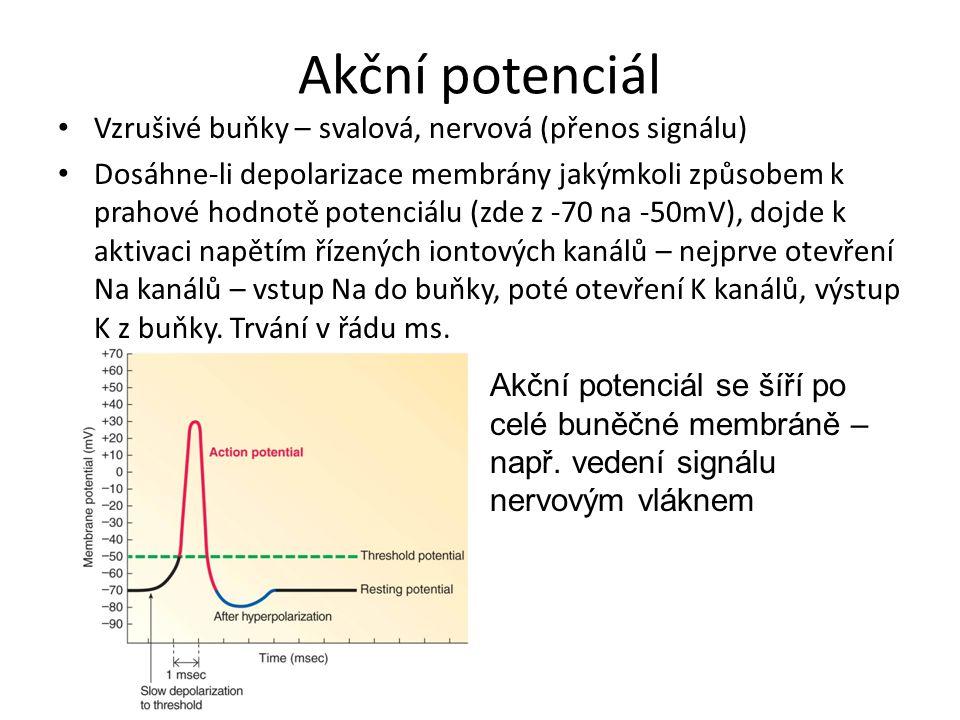 Akční potenciál Vzrušivé buňky – svalová, nervová (přenos signálu)