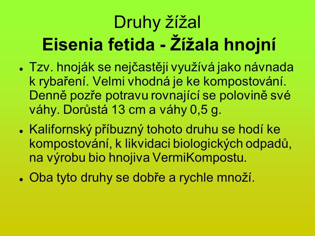 Eisenia fetida - Žížala hnojní