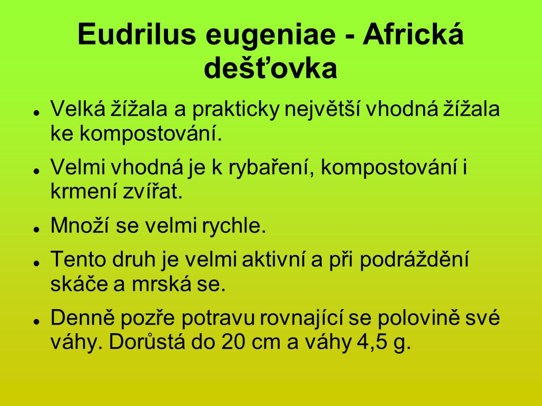Eudrilus eugeniae - Africká dešťovka