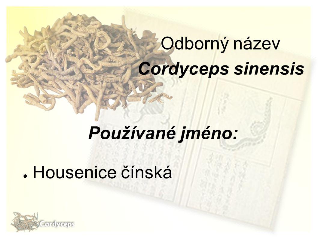 Odborný název Cordyceps sinensis Používané jméno: Housenice čínská