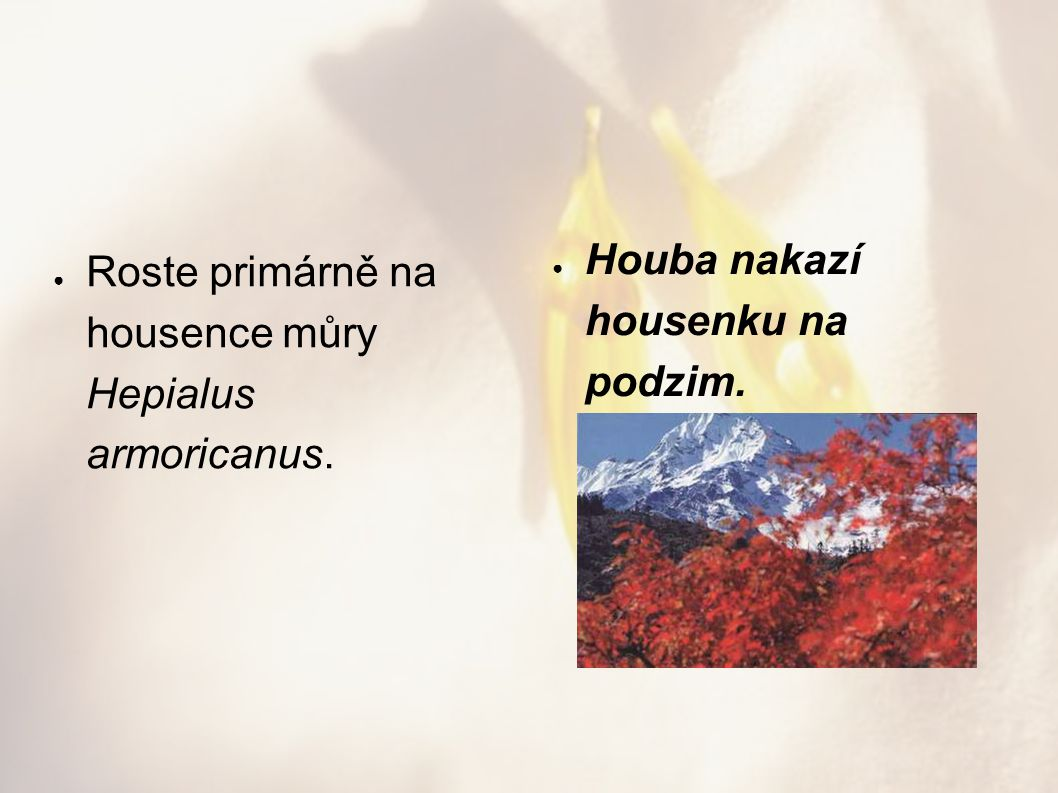 Houba nakazí housenku na podzim.