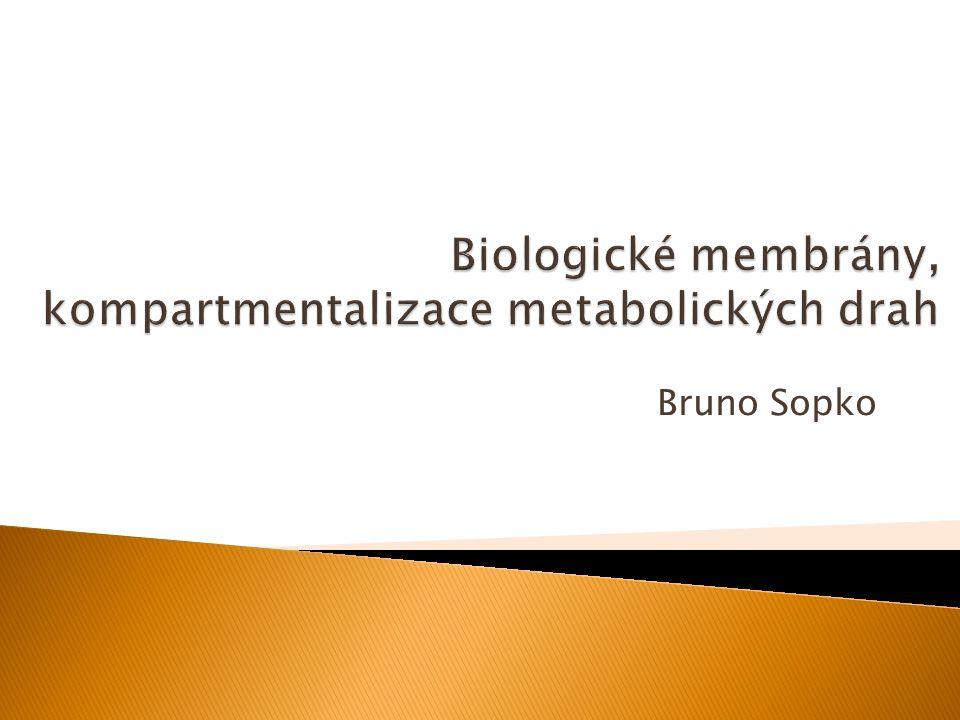 Biologické membrány, kompartmentalizace metabolických drah