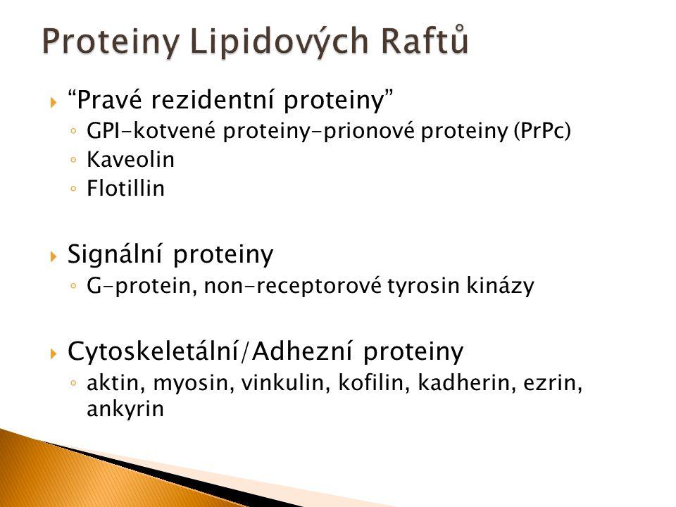 Proteiny Lipidových Raftů