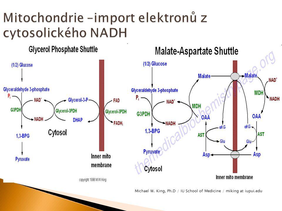 Mitochondrie –import elektronů z cytosolického NADH
