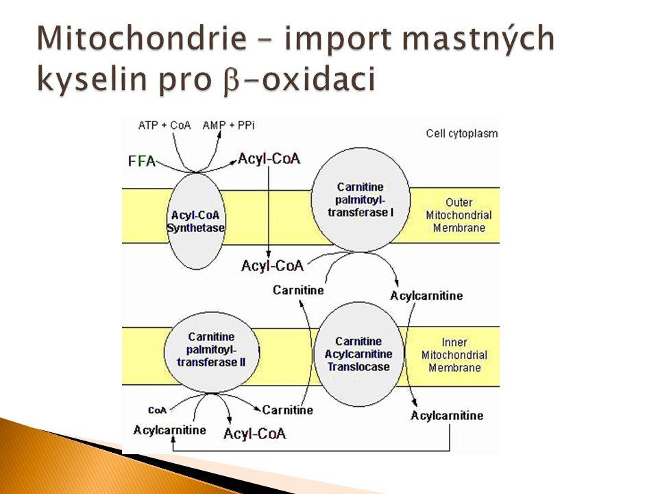 Mitochondrie – import mastných kyselin pro -oxidaci
