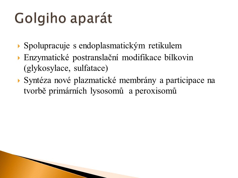 Golgiho aparát Spolupracuje s endoplasmatickým retikulem