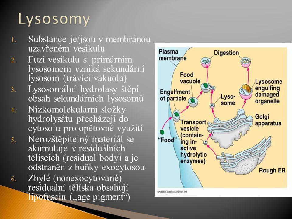 Lysosomy Substance je/jsou v membránou uzavřeném vesikulu