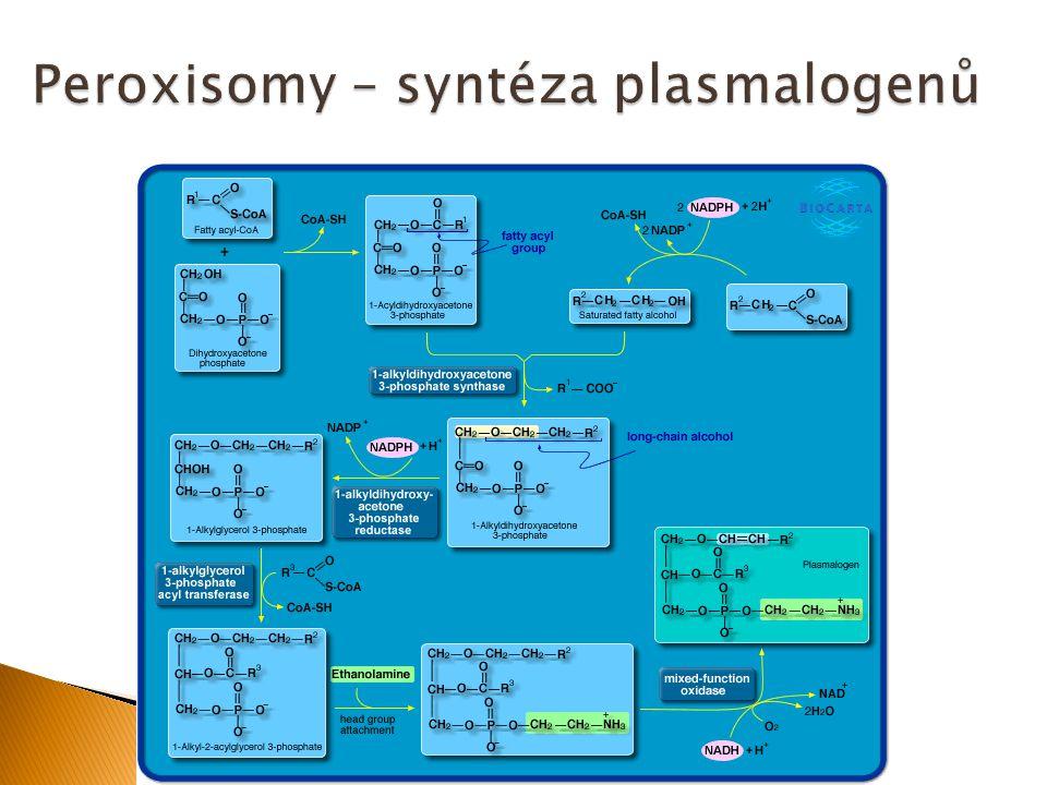 Peroxisomy – syntéza plasmalogenů