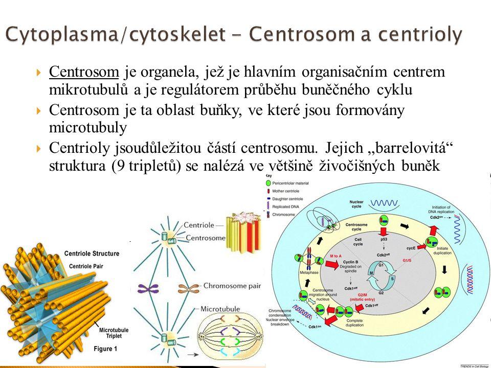 Cytoplasma/cytoskelet - Centrosom a centrioly