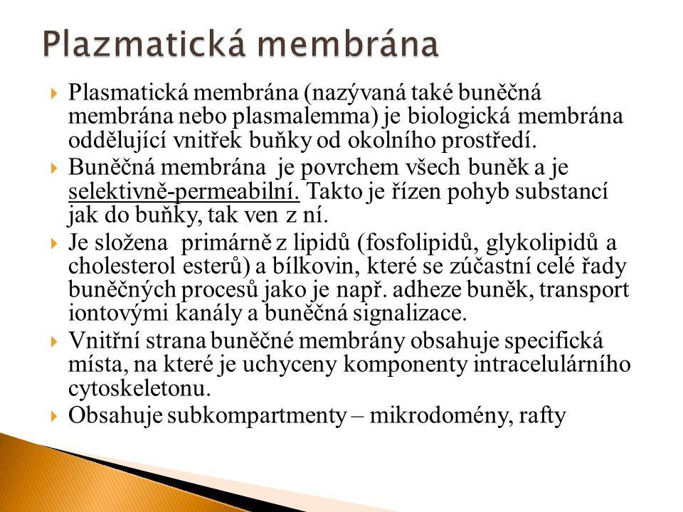 Plazmatická membrána