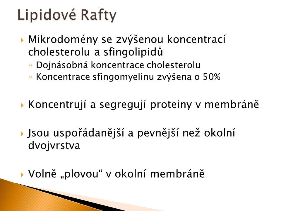 Lipidové Rafty Mikrodomény se zvýšenou koncentrací cholesterolu a sfingolipidů. Dojnásobná koncentrace cholesterolu.
