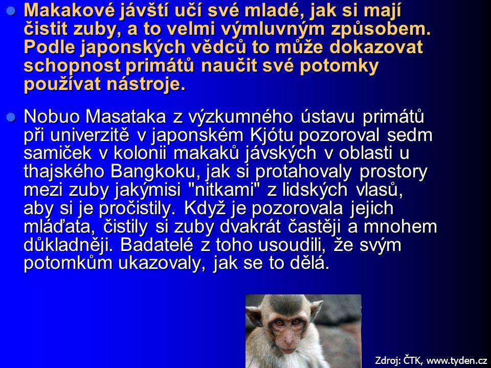 Makakové jávští učí své mladé, jak si mají čistit zuby, a to velmi výmluvným způsobem. Podle japonských vědců to může dokazovat schopnost primátů naučit své potomky používat nástroje.