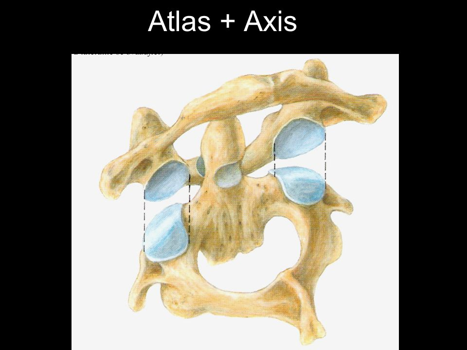 Atlas + Axis