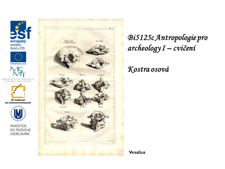 Bi5125c Antropologie pro archeology I – cvičení Kostra osová