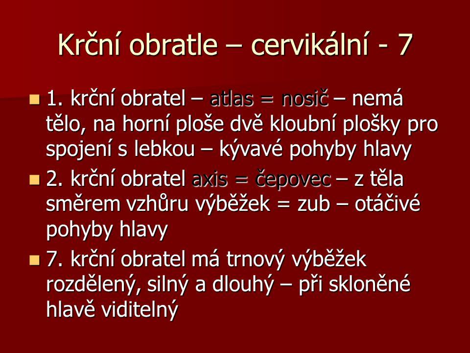 Krční obratle – cervikální - 7