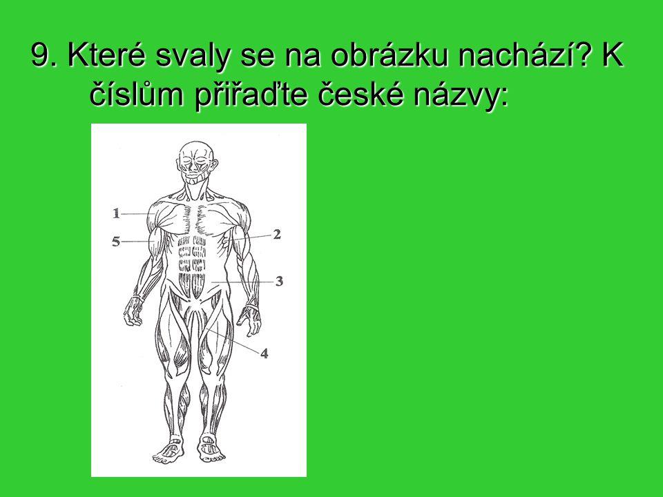 9. Které svaly se na obrázku nachází K číslům přiřaďte české názvy: