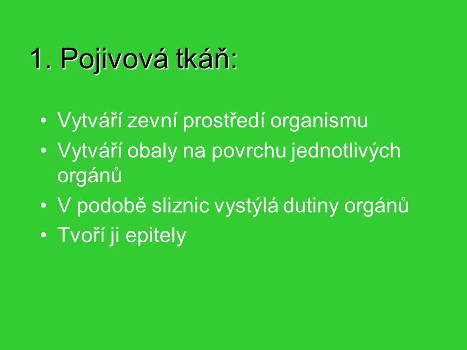 1. Pojivová tkáň: Vytváří zevní prostředí organismu