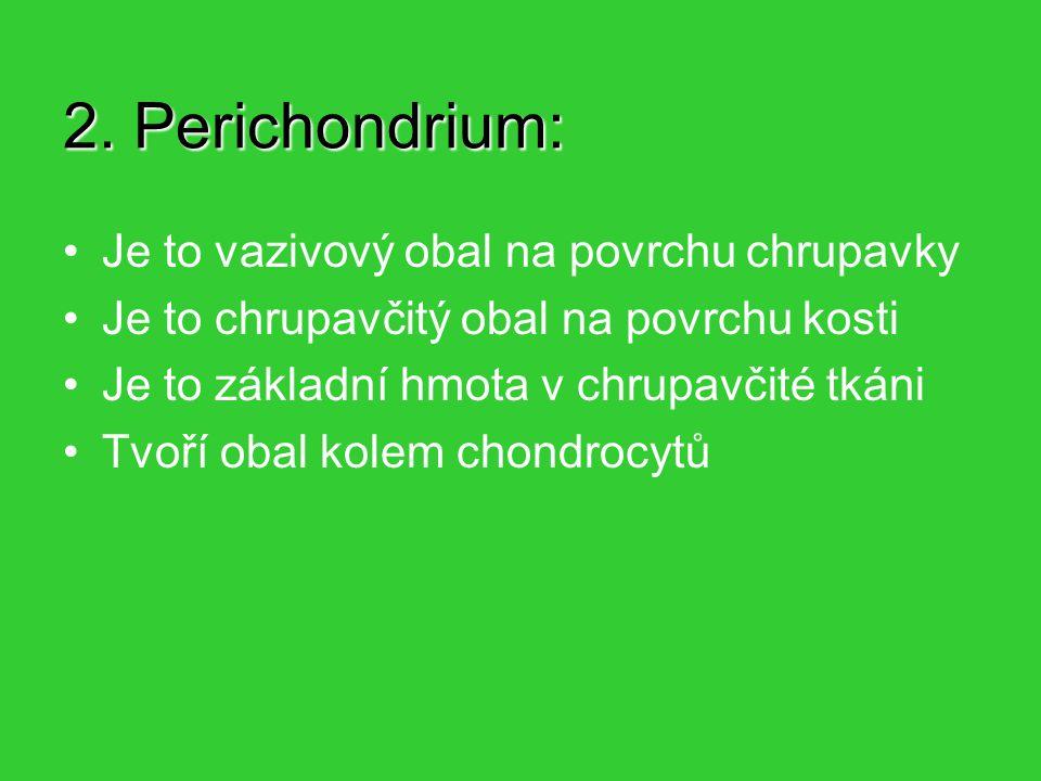 2. Perichondrium: Je to vazivový obal na povrchu chrupavky