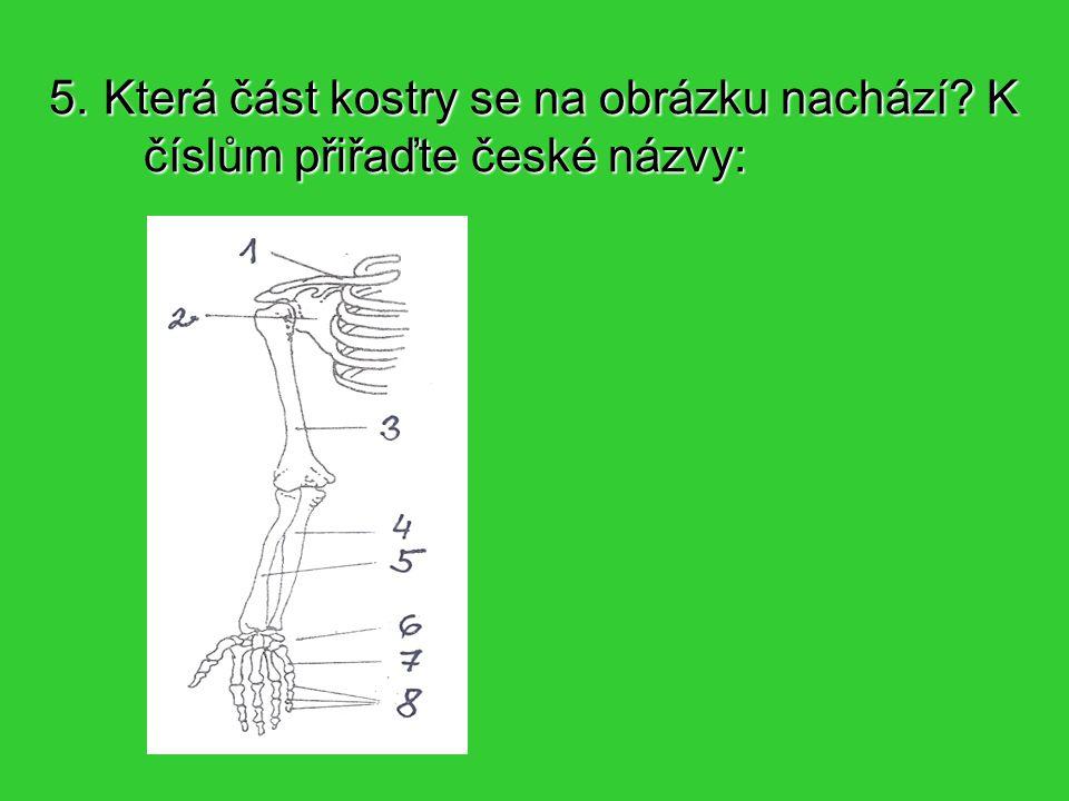 5. Která část kostry se na obrázku nachází