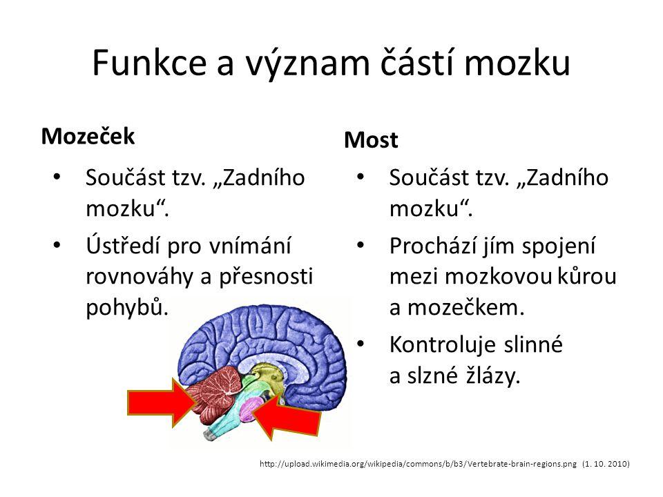 Funkce a význam částí mozku
