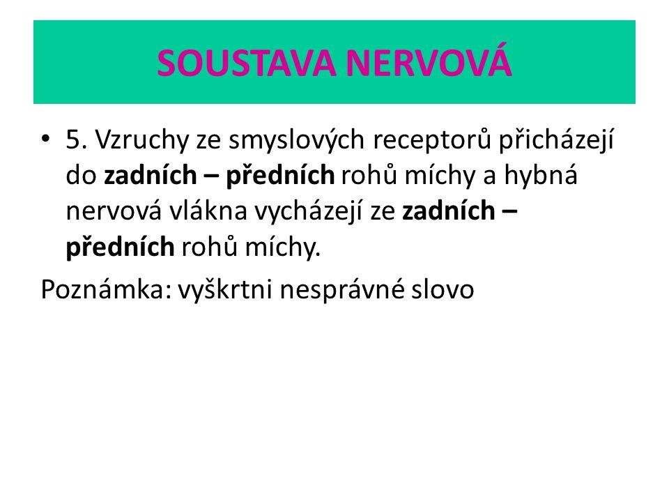 SOUSTAVA NERVOVÁ