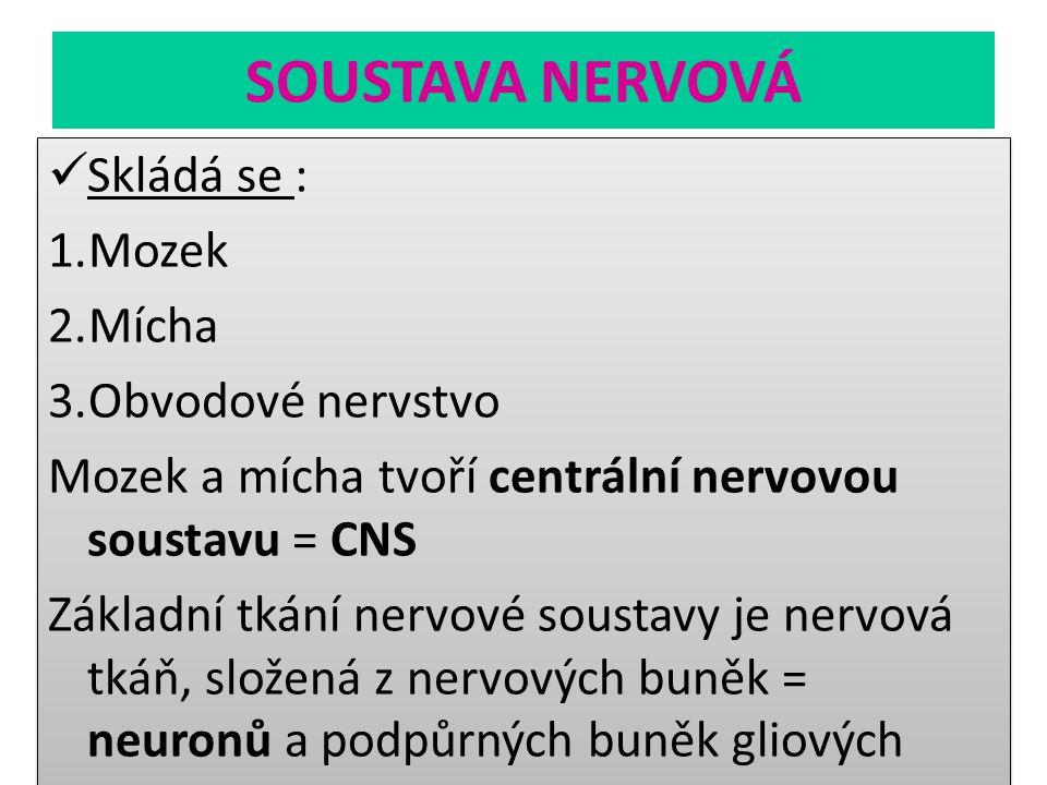 SOUSTAVA NERVOVÁ Skládá se : Mozek Mícha Obvodové nervstvo