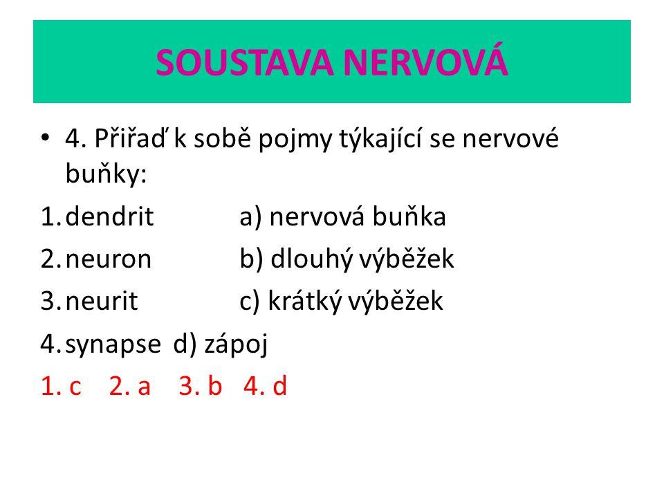 SOUSTAVA NERVOVÁ 4. Přiřaď k sobě pojmy týkající se nervové buňky: