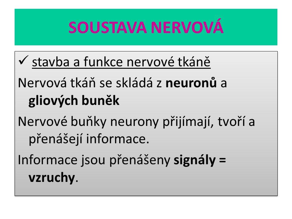 SOUSTAVA NERVOVÁ stavba a funkce nervové tkáně