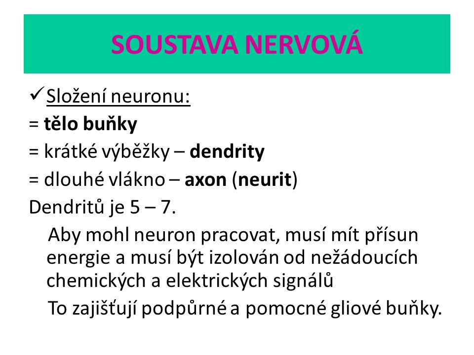 SOUSTAVA NERVOVÁ Složení neuronu: = tělo buňky