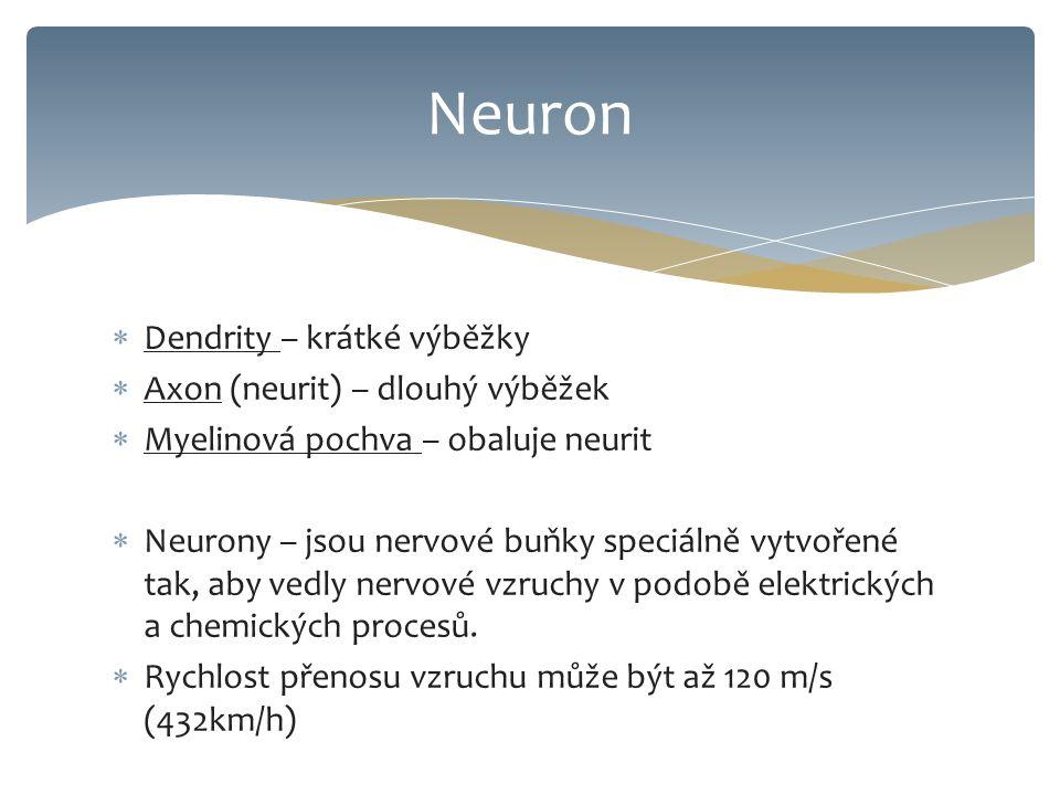 Neuron Dendrity – krátké výběžky Axon (neurit) – dlouhý výběžek