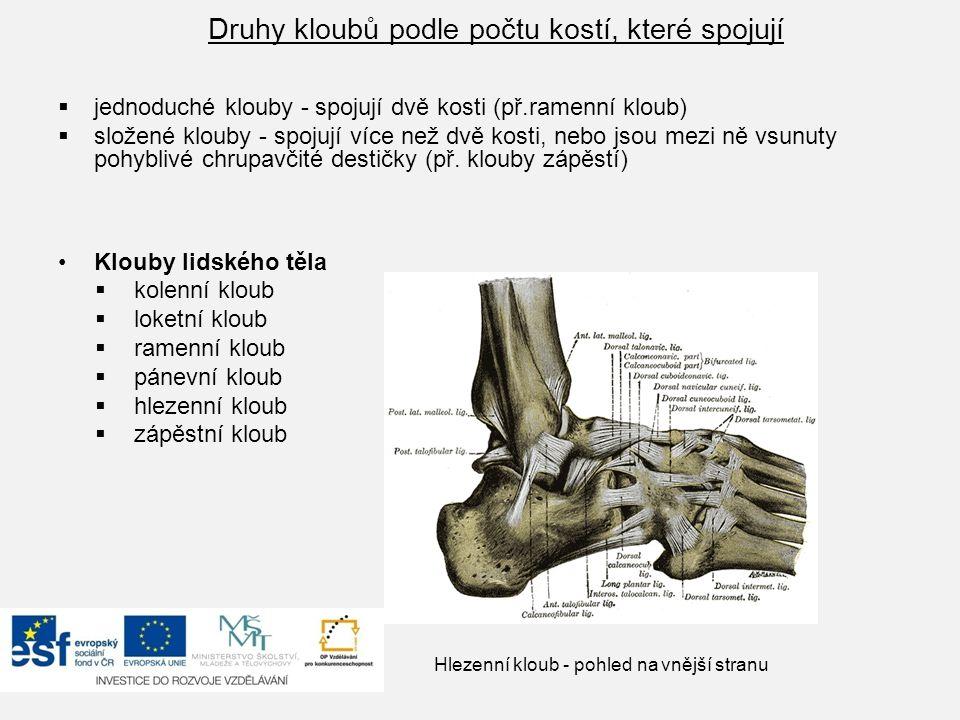 Druhy kloubů podle počtu kostí, které spojují