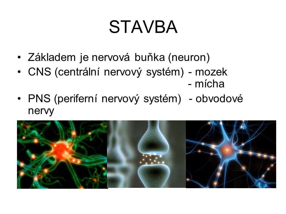 STAVBA Základem je nervová buňka (neuron)