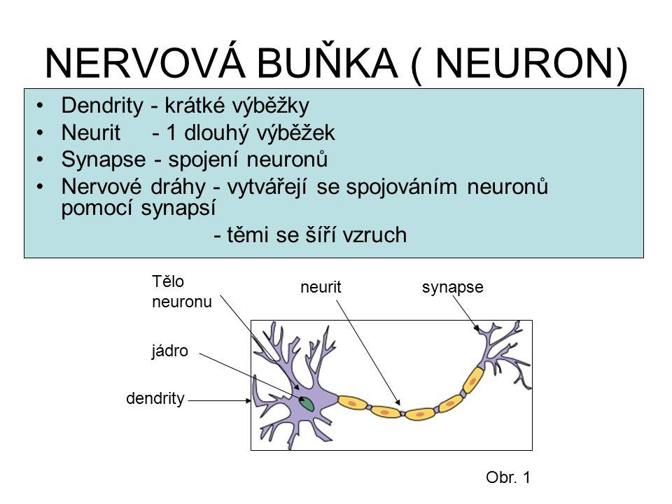 NERVOVÁ BUŇKA ( NEURON)
