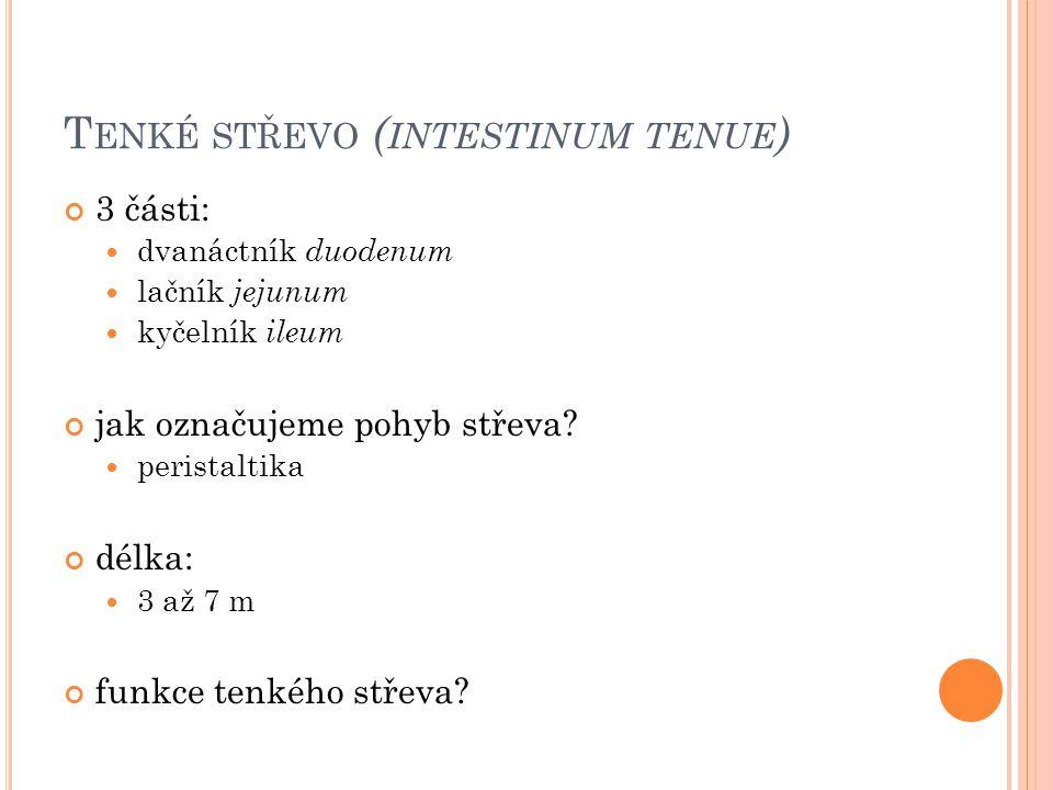 Tenké střevo (intestinum tenue)