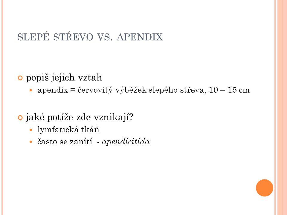 slepé střevo vs. apendix