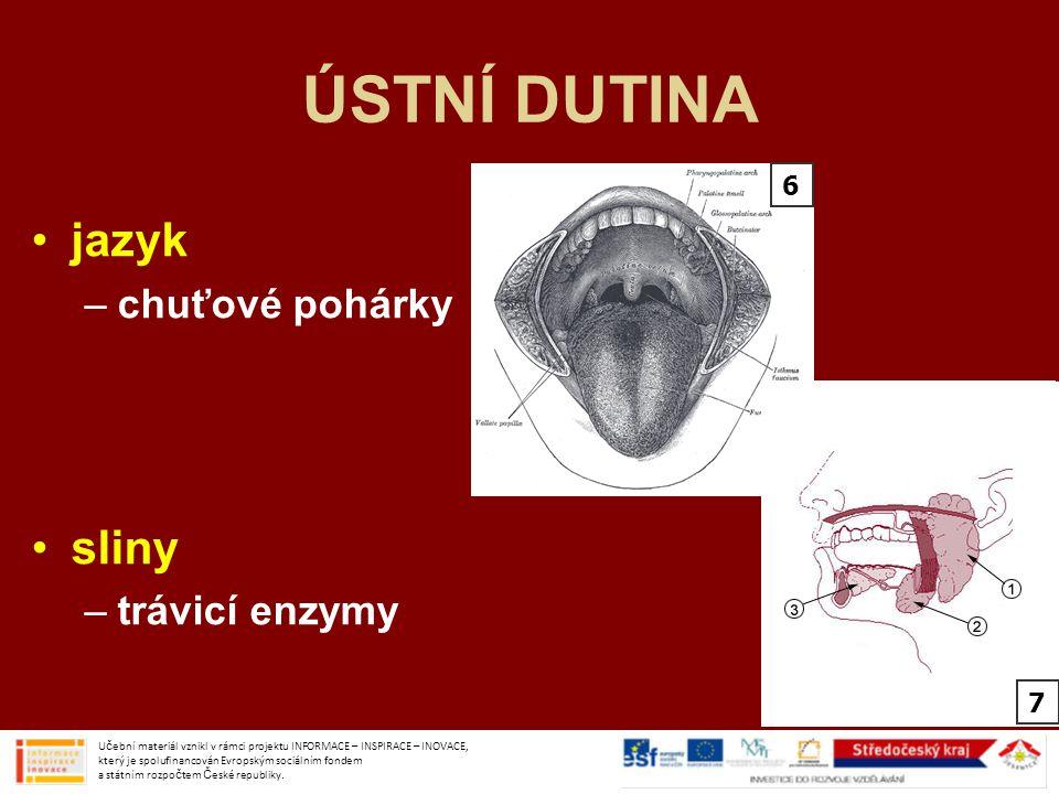 ÚSTNÍ DUTINA jazyk sliny chuťové pohárky trávicí enzymy 6 7