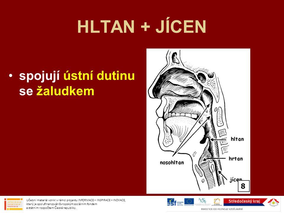 HLTAN + JÍCEN spojují ústní dutinu se žaludkem 8