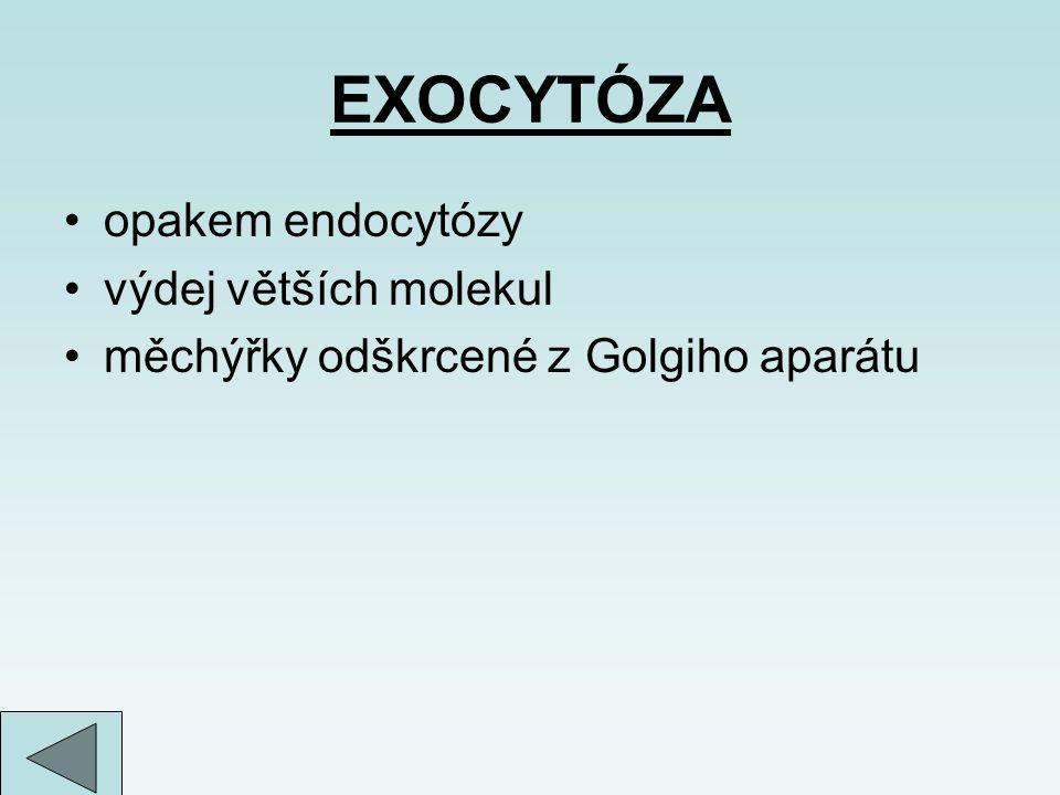 EXOCYTÓZA opakem endocytózy výdej větších molekul